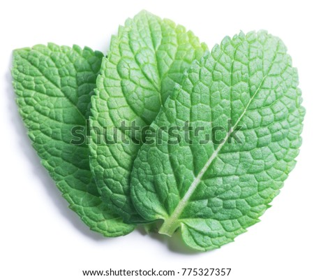 Three spearmint leaves or mint leaves isolated on white background.