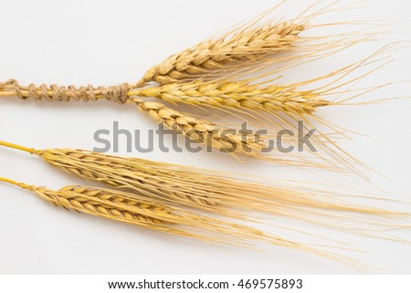 Three spikelets of wheat tied with a rope and two barley twig on a white background