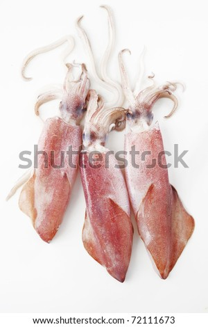 three squid on white background - stock photo