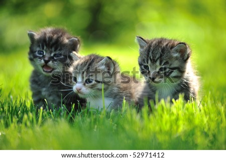 Three striped kittens sitting in the grass - stock photo