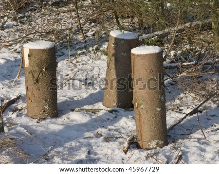 Three stumps in winter forest on sunny day