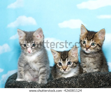 Three tabby kittens sitting on a black and gray bed, blue background with clouds.  - stock photo