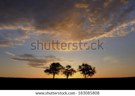 Three Trees and Dramatic Clouds