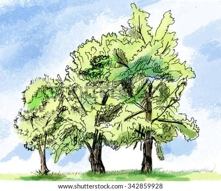 Three trees, drawing - stock photo