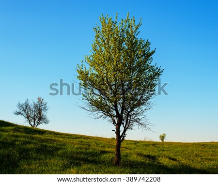 three trees in a field on a background of sky, spring - stock photo