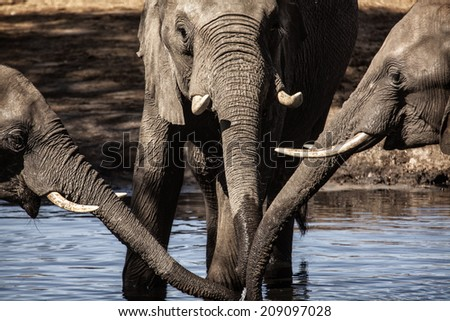 three trunks - stock photo