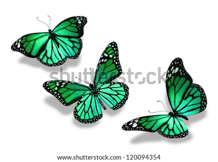 Three turquoise green butterflies, isolated on white background
