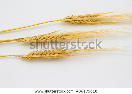 Three twigs of barley  on a white background