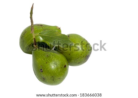 three unripe avocado pears with stalk attached
