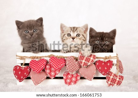 Three Valentine theme kittens sitting inside white wooden box with red ornamental fabric hearts on white fake fur background