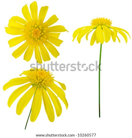 Three views of a yellow flower. Elements for design.