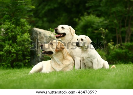 Three white dogs of a miscellaneous age pose on a lawn in park