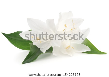 Three white flowers with leaves on white background