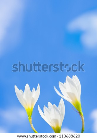 Three white flowers with sky back ground - stock photo