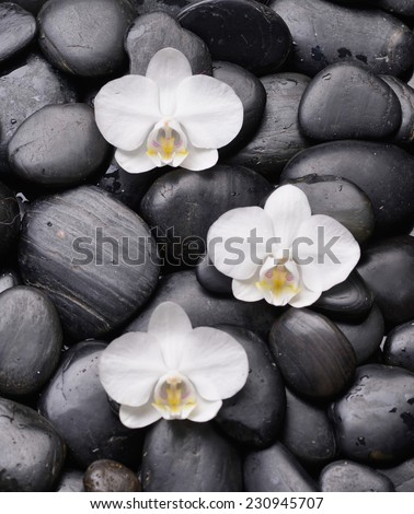 Three white orchid and back stones background
