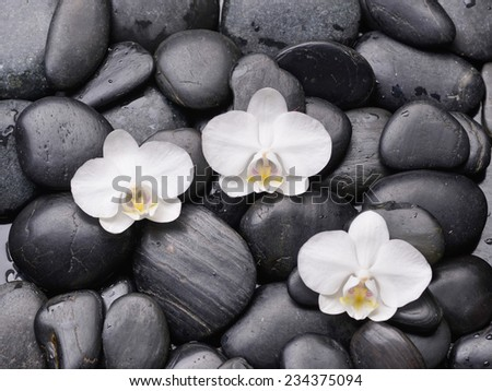 Three white orchid on back stones background