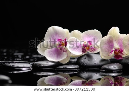 Three white orchid with therapy stones  - stock photo