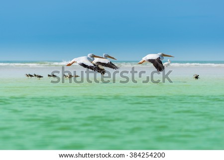 Three white pelicans flying low over turquoise water against clear blue sky - stock photo