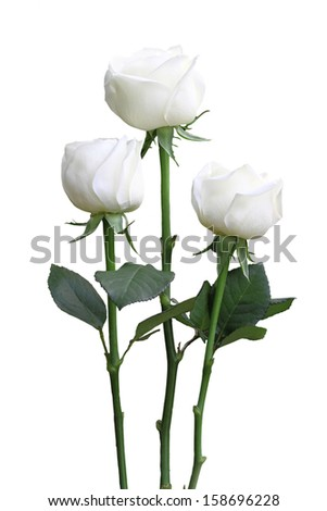 three white roses isolated on white