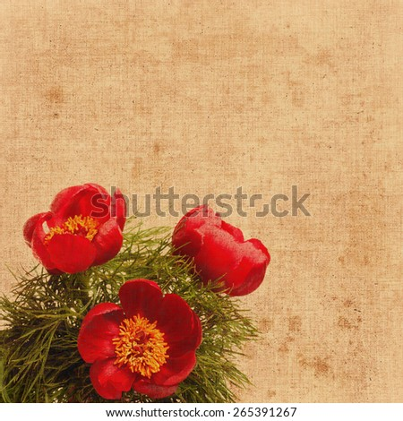 three wild red peony with green leaves on yellow background