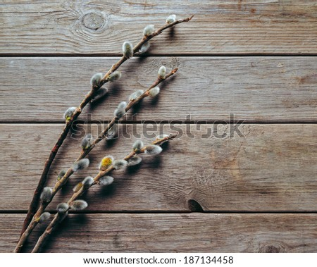Three willow branches with fluffy catkins on a wooden background - stock photo