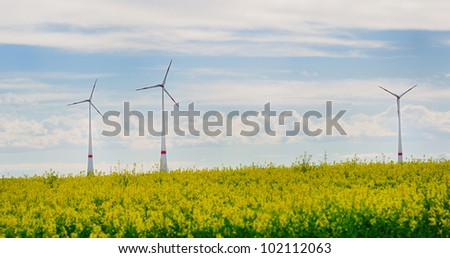 Three windmills behind a yellow rape field.
