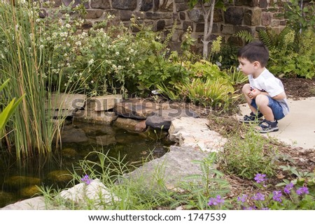 Three year old boy looking at garden pond.