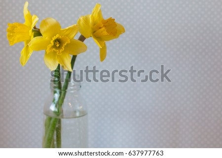 Three Yellow Daffodils Vase Water On Stock Photo Royalty Free