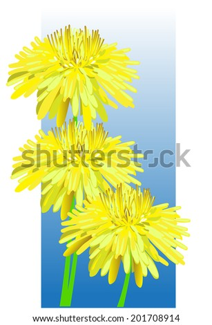 three yellow dandelion on a blue background - stock photo