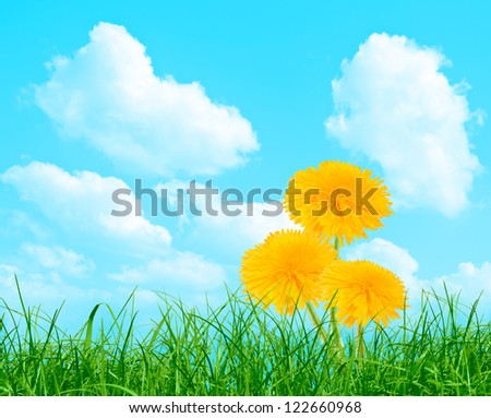 Three yellow dandelions in the grass on the blue sky - stock photo