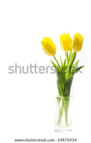 Three yellow tulips in the vase on white background