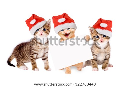 three young cats with Christmas hats and banners isolated - stock photo