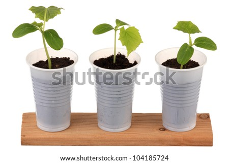 Three young fresh seedling stands in plastic pots - stock photo