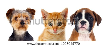 Three young pets isolated on a white background
