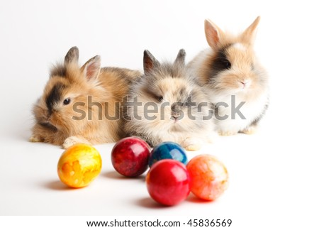 Three young rabbits with easter eggs isolated on white background - stock photo