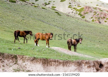 Threee horses in the field on green grass - stock photo