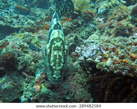 Thriving  coral reef alive with marine life and  fish, Bali. - stock photo