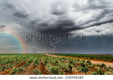 Thunderstorm containing a rainbow and lighting, over a Sugar cane field