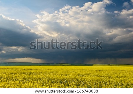 Thunderstorm over a canola field  - stock photo