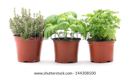 Thyme, basil and parsley in planting pots on white background - stock photo