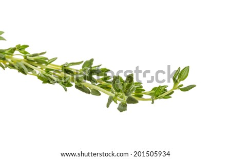 Thyme branch isolated on white background