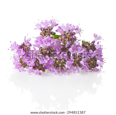 Thyme flowers and leaves close-up on a white background.