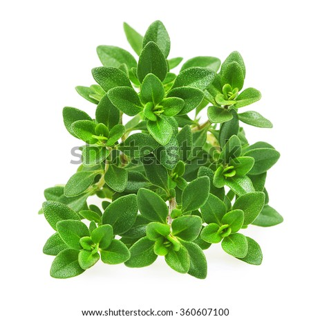 Thyme fresh herb isolated  - stock photo