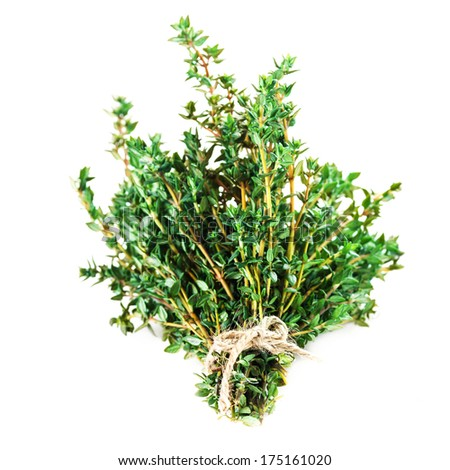 Thyme fresh herb isolated on white background closeup. Bunch of fresh thyme. - stock photo