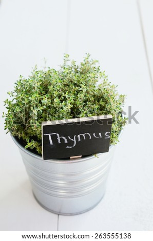 Thyme herb in a planter with chalkboard with its name in Latin with copy space on light background - stock photo