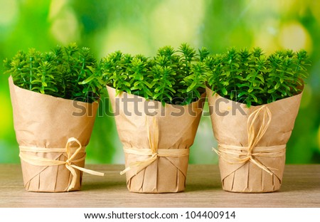 thyme herb plants in pots with beautiful paper decor on green background on wooden table - stock photo