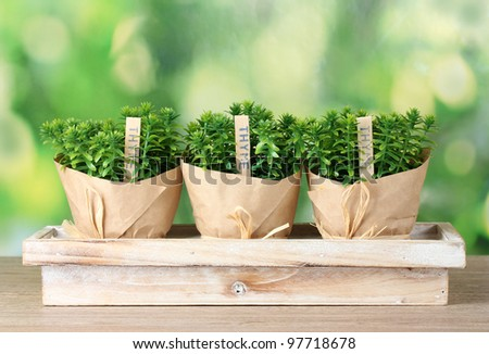 thyme herb plants in pots with beautiful paper decor on  wooden stand on green background - stock photo