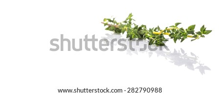 Thyme herbs leaves over white background - stock photo