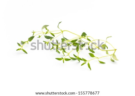 Thyme isolated on the white background.