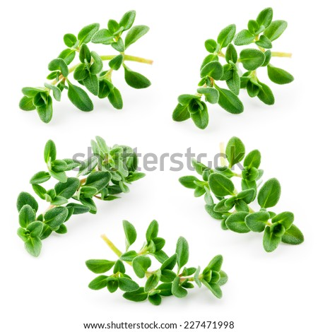 Thyme isolated on white background. Collection - stock photo